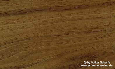 amerikanische nussholz südtirol